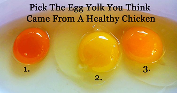 difference between egg white and yolk canada food guide