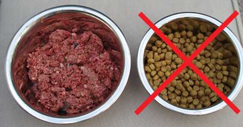 guide to raw dog food diet